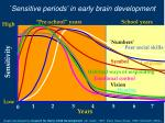 sensitive periods in early brain development