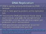 dna replication2