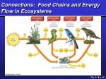 connections food chains and energy flow in ecosystems