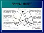 foetal skull2