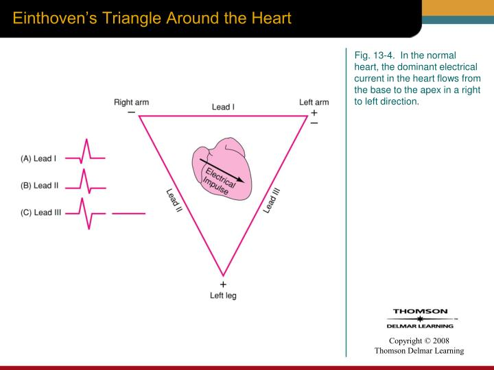 Einthoven's Triangle Around the Heart