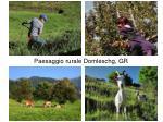 paesaggio rurale domleschg gr