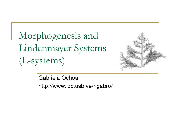 morphogenesis and lindenmayer systems l systems n.