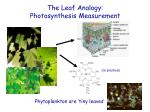 the leaf analogy photosynthesis measurement