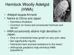 hemlock woolly adelgid hwa