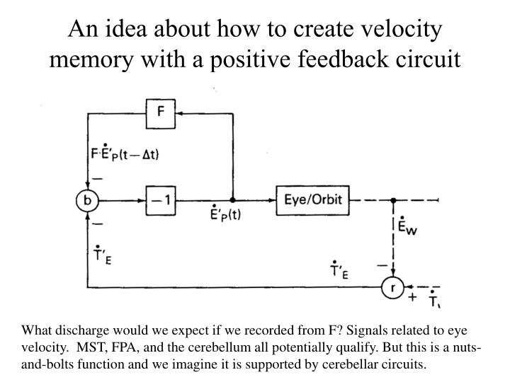 An idea about how to create velocity memory with a positive feedback circuit