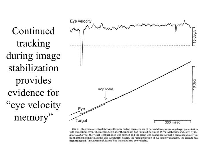 "Continued tracking during image stabilization provides evidence for ""eye velocity memory"""