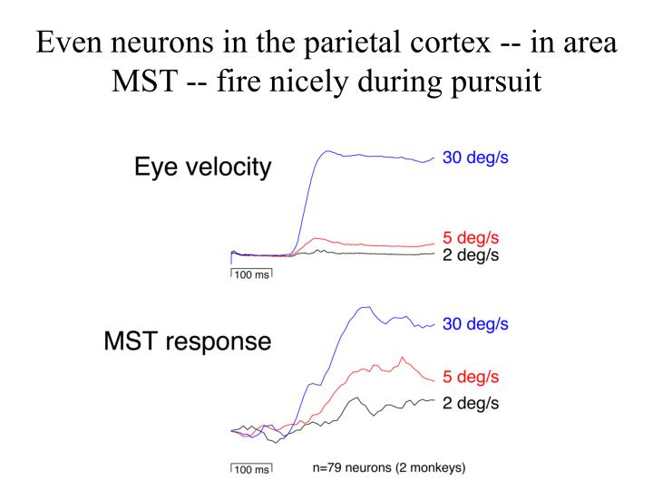 Even neurons in the parietal cortex -- in area MST -- fire nicely during pursuit