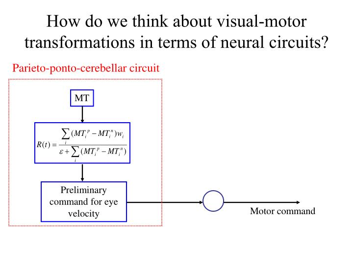 How do we think about visual-motor transformations in terms of neural circuits?