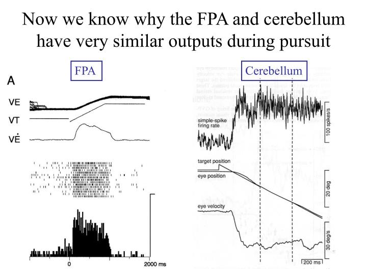 Now we know why the FPA and cerebellum have very similar outputs during pursuit