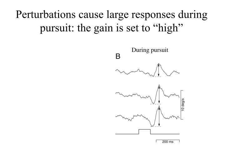 "Perturbations cause large responses during pursuit: the gain is set to ""high"""