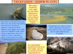 vegetation other plants