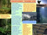 vegetation woodland