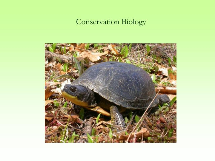 conservation biology n.