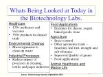 whats being looked at today in the biotechnology labs
