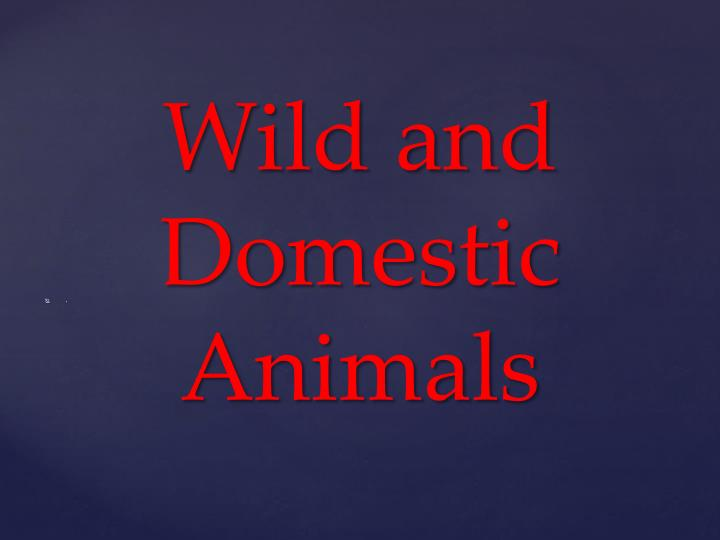 wild and domestic animals n.