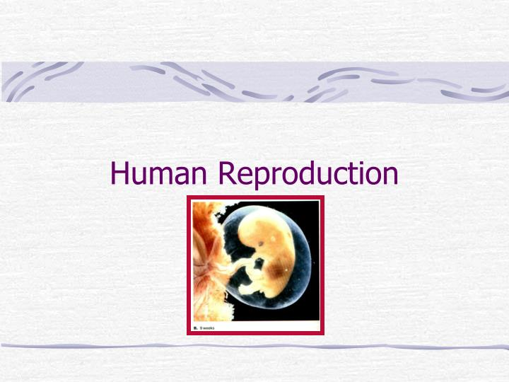 human reproduction n.