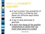 what is a punnett square