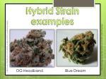 hybrid strain examples