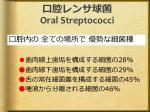 oral streptococci
