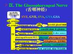 the g lossopharyngeal nerve