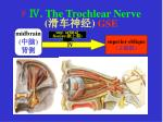 the trochlear nerve gse