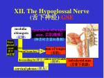 xii the hypoglossal nerve gse
