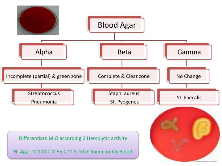 Differentiate M.O according 2 Hemolytic activity