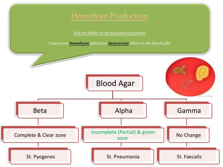 Hemolysin