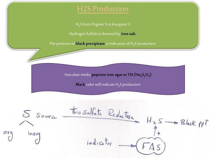 H2S Production