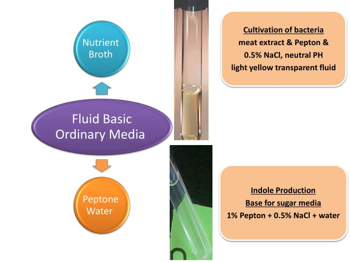 Cultivation of bacteria