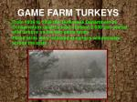 game farm turkeys