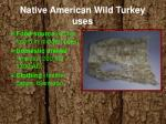 native american wild turkey uses