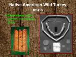 native american wild turkey uses1