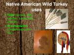 native american wild turkey uses2