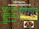physical characteristics1