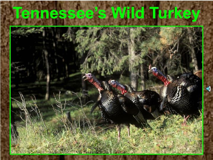 tennessee s wild turkey n.