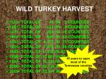 wild turkey harvest