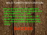 wild turkey restoration
