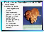15 8 gene transfers in animals