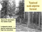typical sub alpine forest
