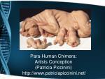 para human chimera artists conception patricia piccinini http www patriciapiccinini net