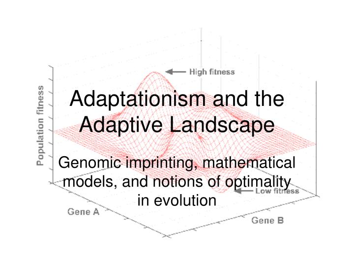 adaptationism and the adaptive landscape n.