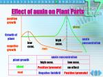 effect of auxin on plant parts