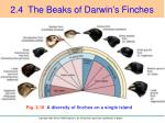 2 4 the beaks of darwin s finches1