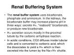 renal buffering system