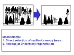 mechanisms 1 direct selection of resilient canopy trees 2 release of understory regeneration