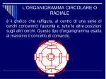 l organigramma circolare o radiale