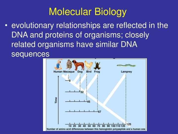 evidence for evolutions pdf ppt