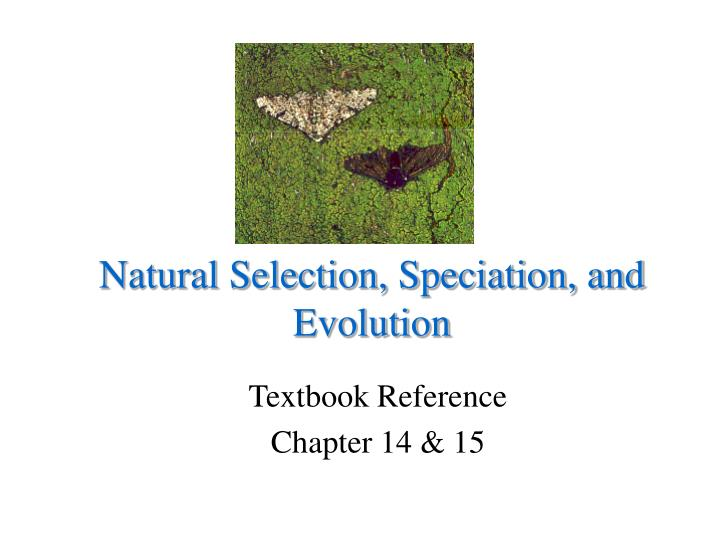 natural selection speciation and evolution n.